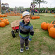 Photo courtesy of Hall's Pumpkin Farm