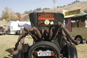 Medium tarantulafestival