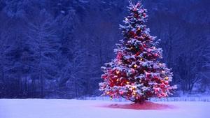 Medium tumblr static free wallpaper christmas tree