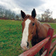 """The """"My Amazing Graceland"""" book features photos of Glade Run Adventures' horses and is about autism from the point of view of a therapeutic horse"""