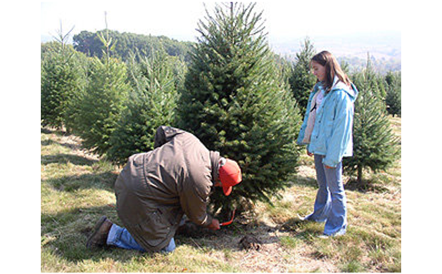 Find your 2014 christmas tree at one of these 10 central pa places find your 2014 christmas tree at one of these 10 central pa places solutioingenieria Choice Image