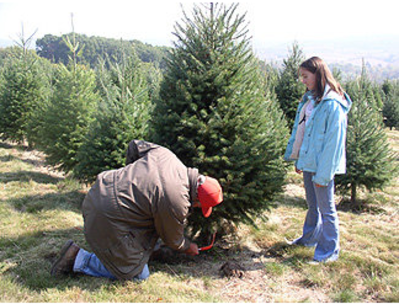 Find Your 2014 Christmas Tree at One of These 10 Central PA Places ...