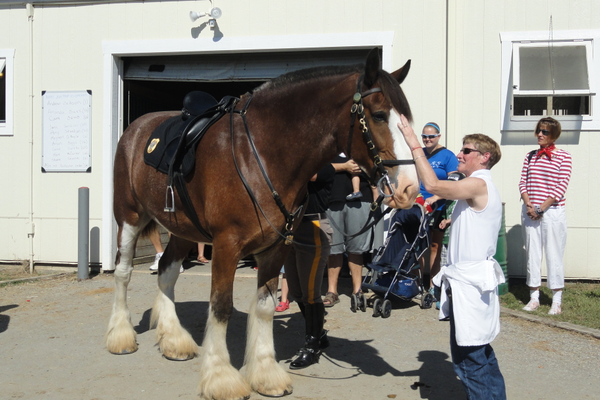 The police horses at Carousel Park enjoyed the attention they received from the visitors.