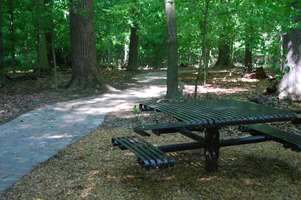 A paved walkway allows those with limited mobility the opportunity to be surrounded by nature.