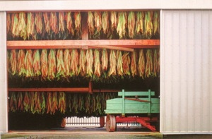Tobacco Leaves Drying in Barn by Anita Bower