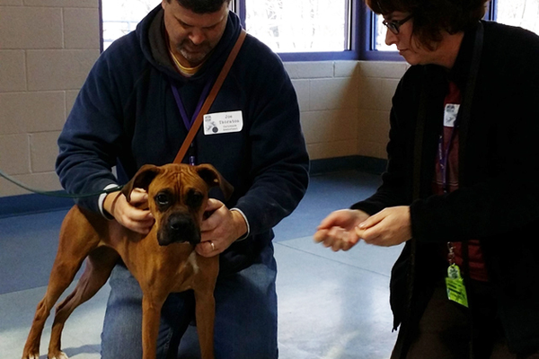 A young boxer is just one of the many animals given a second chance at Animal Friends.