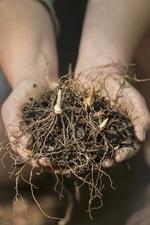 Enhancing Life in the Soil - start Mar 28 2015 0830AM