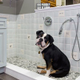 Cabinetry concepts dog bath