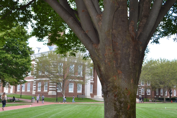 Several trees on The Green remain from the time they were first planted in 1917.