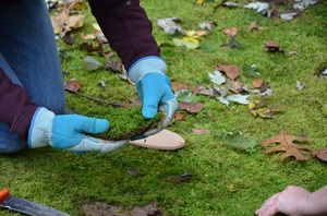 Adventures in Moss Gardening - start Apr 11 2015 0100PM