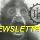 The Kitchen Drawer Newsletter the Greatest Subscription You Didnt Know You Needed - Mar 02 2015 0600PM