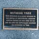 The Witness Tree, which has been standing since the Battle of Gettysburg
