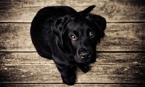 Medium_animal-dog-eyes-1137