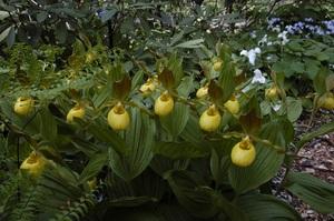 Medium orchids 20small