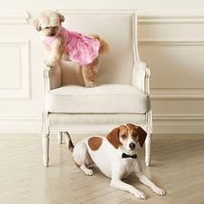 Medium_12683-pet-friendly-attire-for-a-walk-down-the-aisle