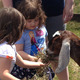 Feeding the goats of Ironshoe Farms petting zoo