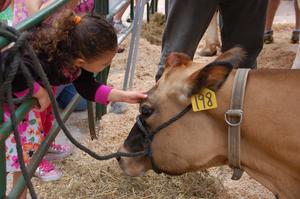 Medium cowsontheconcourse r
