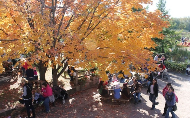 Fall Tree and People