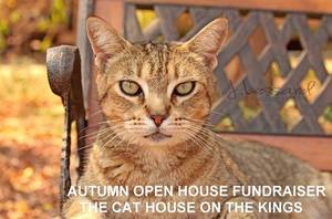 Medium cathouse