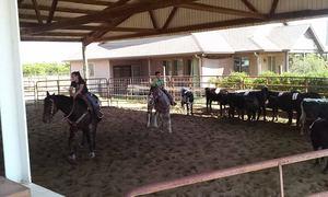 Medium cattle