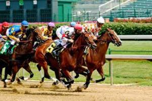 Medium horses