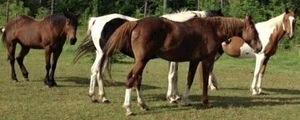 Medium horses 20header 20photo 20copy 20 2