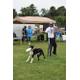 The amazing frisbee catching dog wowed the crowd at the 2nd Annual Tewksbury Fall Harvest Fair.