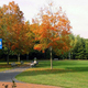 Fall color on the Bellingham Town Common