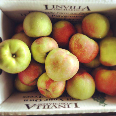 Linvilla orchard apples 400vp