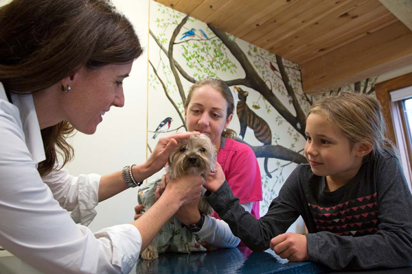 Dr. Jennifer Lesser, her daughter Reese and nurse Sara Eisenhauer cooperate to help Whiskers relax in the exam room. Wall mural painted by Patti Cerra.