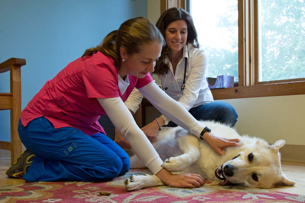 Exam rooms with the comforts of home like cozy area rugs and large spaces, as well as lots of positive attention helps put pets at ease during potentially stressful visit. Sara Eisenhauer relaxes Winter while Dr. Lesser looks him over.