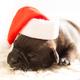 Adopt a Shelter Pet $45-$150 at Sacramento SPCA, 6201 Florin Perkins Road, Sacramento. 916-383-7387, sspca.org