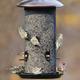 Stokes Select Giant Combo Bird Feeder $44.99 at PetCo, 855 East Bidwell Street, Folsom. 916-984-6141, petco.com