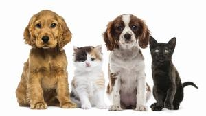 What You Should Consider Before Giving the Gift of a Pet - Nov 26 2015 1132AM