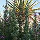 Big Bend is home to 51 species of cacti