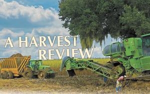 Medium harvest 20opening