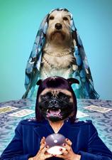 Medium psychic 20dog 20single