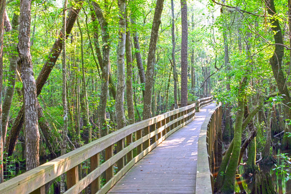 General Coffee Trail Boardwalk. Photo courtesy of Georgia Department of Natural Resources.