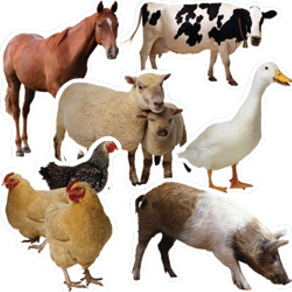 Farm 20animals 20accents