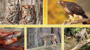 Medium brgg outdoor education wildlife