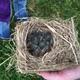 Thumb bluebirds 20stable 20area 205.13.16 20fitness 20walk