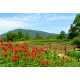 Lovely view of Stonewall Creek Vineyards in bloom.