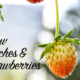 Learn to Grow Peaches and Strawberries - Jun 20 2016 0300PM