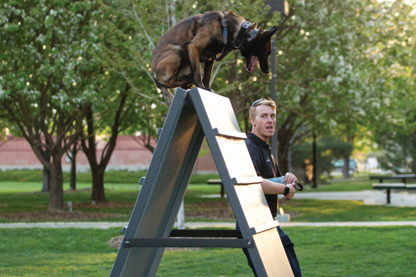 Sandy police K-9 officer works K-9 Joker over the new A-frame obstacle provided by Austin Cole. —Sarah Knight Photography