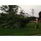 Tree damage during the July 5, 2016 storm in Maple Grove. (photo by Doug Erlien)