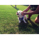 Nala the dog very excited for the dog walk —Natalie Mollinet