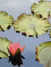 Medium waterlily 2035 20300dpi 2030 20x 2040 20 773x1024