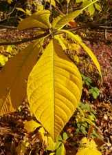 Medium fall 20gardening 20saturday 20fall 20trees 20shrubs