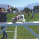 A miniature schnauzer tries out the K-9 obstacle course. (Kelly Cannon/City Journals)