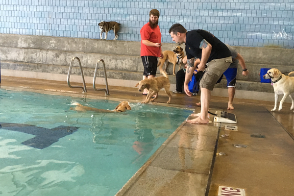 Dogs swam from one end of the pool to the other in the doggy paddle race at the Dog Days of Summer event on Sept. 17 at the Family Fitness Center. (Travis Barton/City Journals)